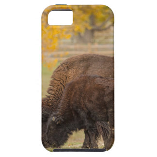 AAutumn Buffaloes Cow and Calf iPhone 5 Cover