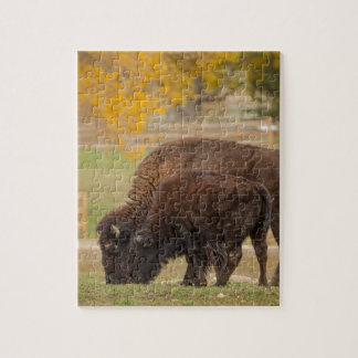 AAutumn Buffaloes Cow and Calf Jigsaw Puzzle