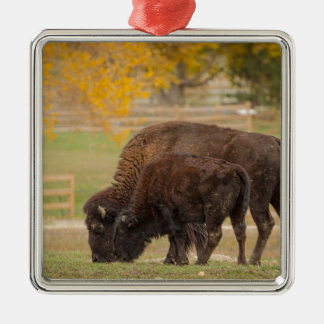 AAutumn Buffaloes Cow and Calf Metal Ornament