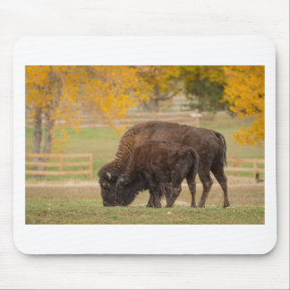 AAutumn Buffaloes Cow and Calf Mouse Pad