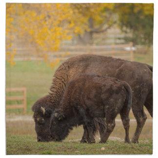 AAutumn Buffaloes Cow and Calf Napkin
