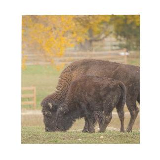 AAutumn Buffaloes Cow and Calf Notepad