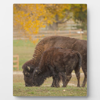 AAutumn Buffaloes Cow and Calf Plaque