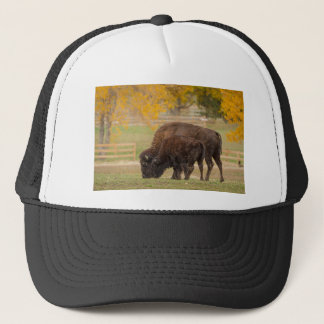 AAutumn Buffaloes Cow and Calf Trucker Hat