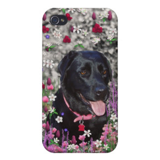 Abby in Flowers – Black Lab Dog Cases For iPhone 4
