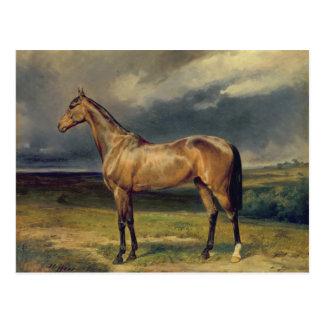 Abdul Medschid' the chestnut arab horse, 1855 Postcard