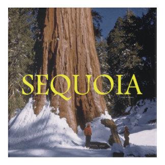 ABH Sequoia Acrylic Print