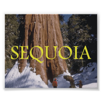 ABH Sequoia Poster