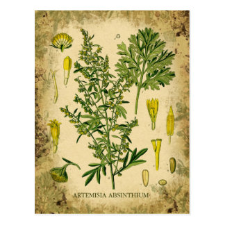 Absinthe Botanical Collage Postcard