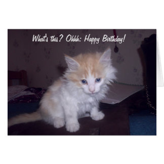 Absolutely sweet kitten wishes a happy birthday! greeting card