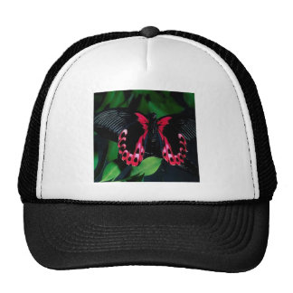 Abstract Animal Elegant Butterfly Trucker Hats
