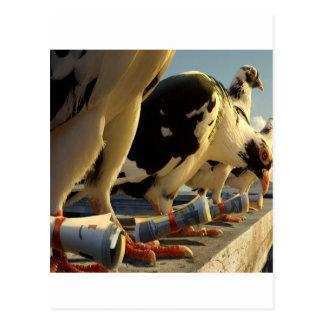Abstract Animal Pigeon Message Postcard