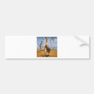 Abstract Animals Kangaroo Baby Shock Bumper Stickers