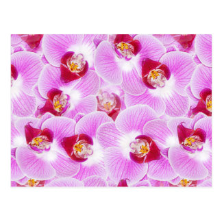 Abstract Background of an Orchid Flower Photograph Postcard