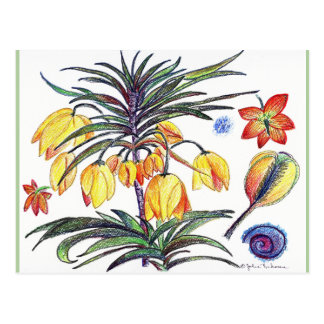 Abstract Botanical Flower drawing Post Card