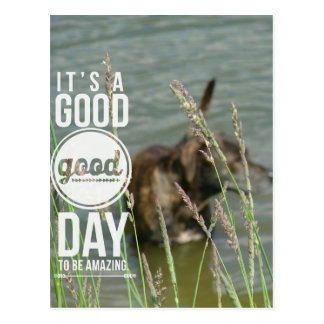 Abstract Dog in Pond Good Day to Be Amazing Postcard