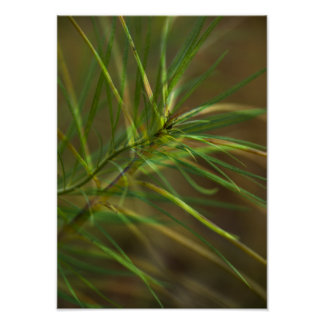 Abstract Foliage Poster