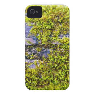 abstract green moss_on wood in winter Case-Mate iPhone 4 case
