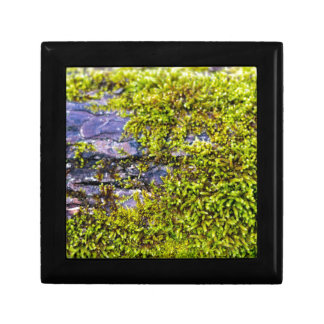 abstract green moss_on wood in winter gift box