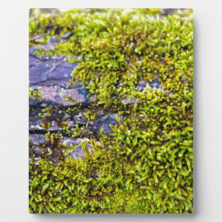 abstract green moss_on wood in winter plaque