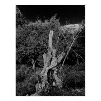 Abstract horror art - dolls head in dead tree postcard