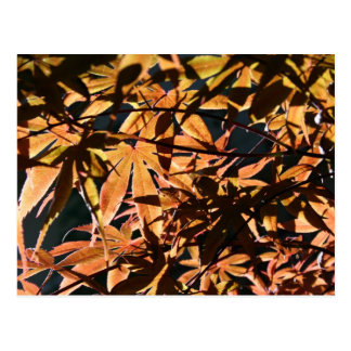 Abstract & japanese Maple Postcard