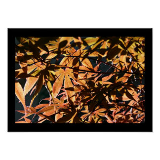Abstract & japanese Maples - Floral Photography Poster