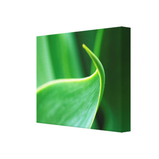 Abstract Leaf Canvas Art Print
