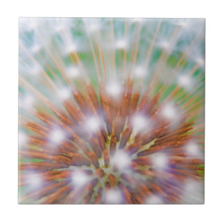 Abstract of dandelion seed head small square tile