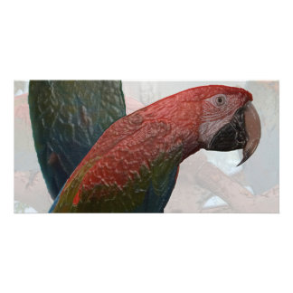 Abstract Parrots Photo Card