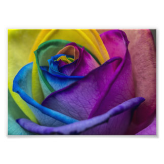 Abstract Rainbow Rose Photo