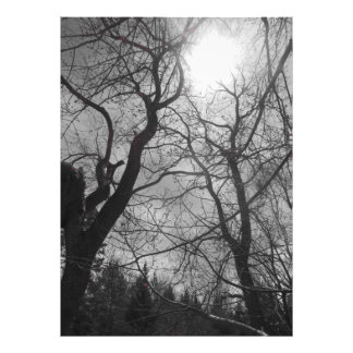 Abstract tree sun black & white photo print