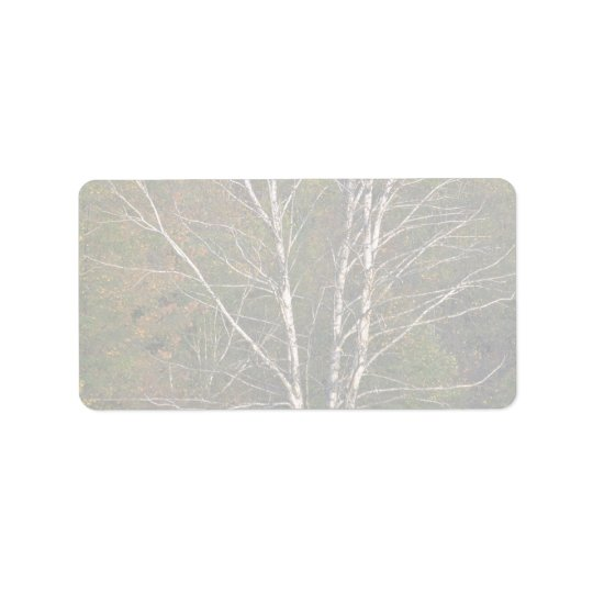 Abstract White birch tree on the edge of a hardwoo Label