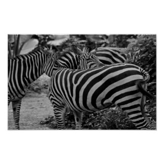 Abstract Zebras Poster