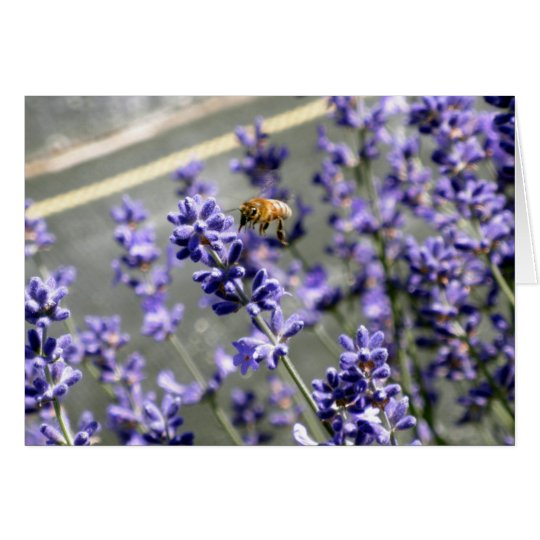 Abuzz with Lavender Greeting Card