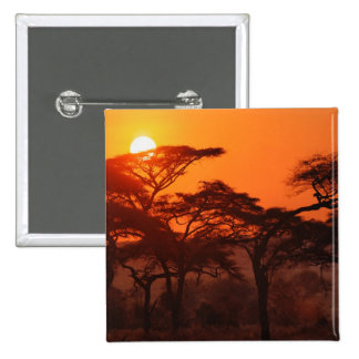 Acacia forest silhouetted at sunset, Tarangire Pins