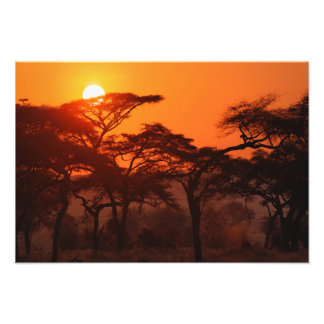 Acacia forest silhouetted at sunset, Tarangire Photographic Print