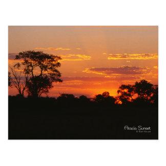 Acacia Sunset Postcard
