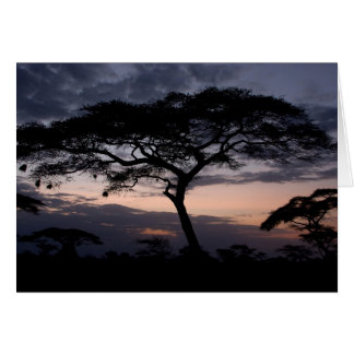 Acacia Trees Sunset Cards