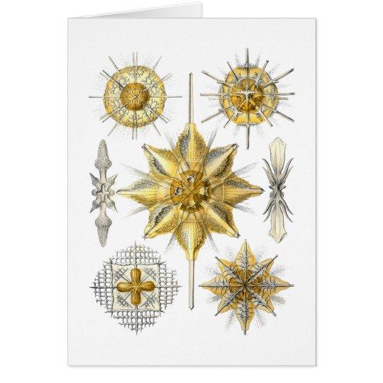 Acanthometra Card