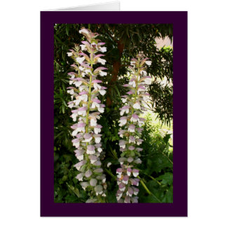 Acanthus Blossoms Card