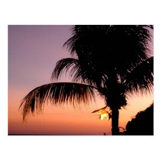 Acapulcan Palm at Dusk Postcard