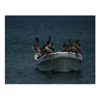 Acapulco pelicans postcard