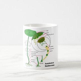 Acetabularia Mediterranea Life Cycle Diagram Coffee Mug