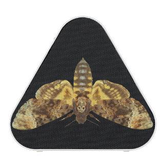 Acherontia Lachesis - Death's-head Hawkmoth