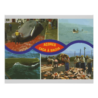 Acores Caca A Baleia, Vintage Flyer