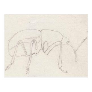 Acorn Weevil Penelope Postcard