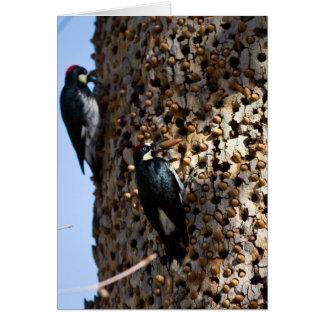 Acorn Woodpeckers Card