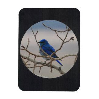 Add Photo Circle Frame(black) Rectangular Photo Magnet