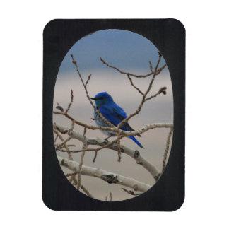 Add Photo Oval Frame(black) Magnet